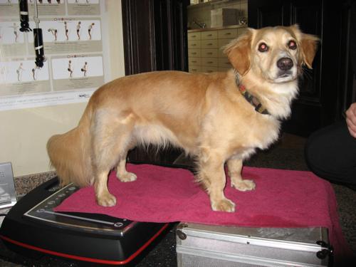 como fazer fisioterapia em cachorro